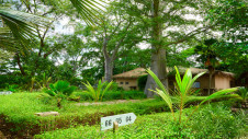 Plants and trees surrounding the family suites of Hotel Les Palétuviers