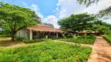 The zebra lodges in the garden of Hotel Les Palétuviers surrounded by trees and grass
